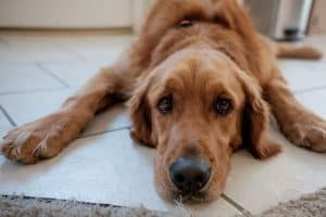 Puppy feeling sick