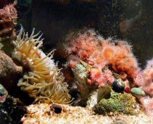corals and algae