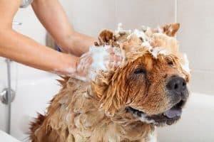 dog being washed