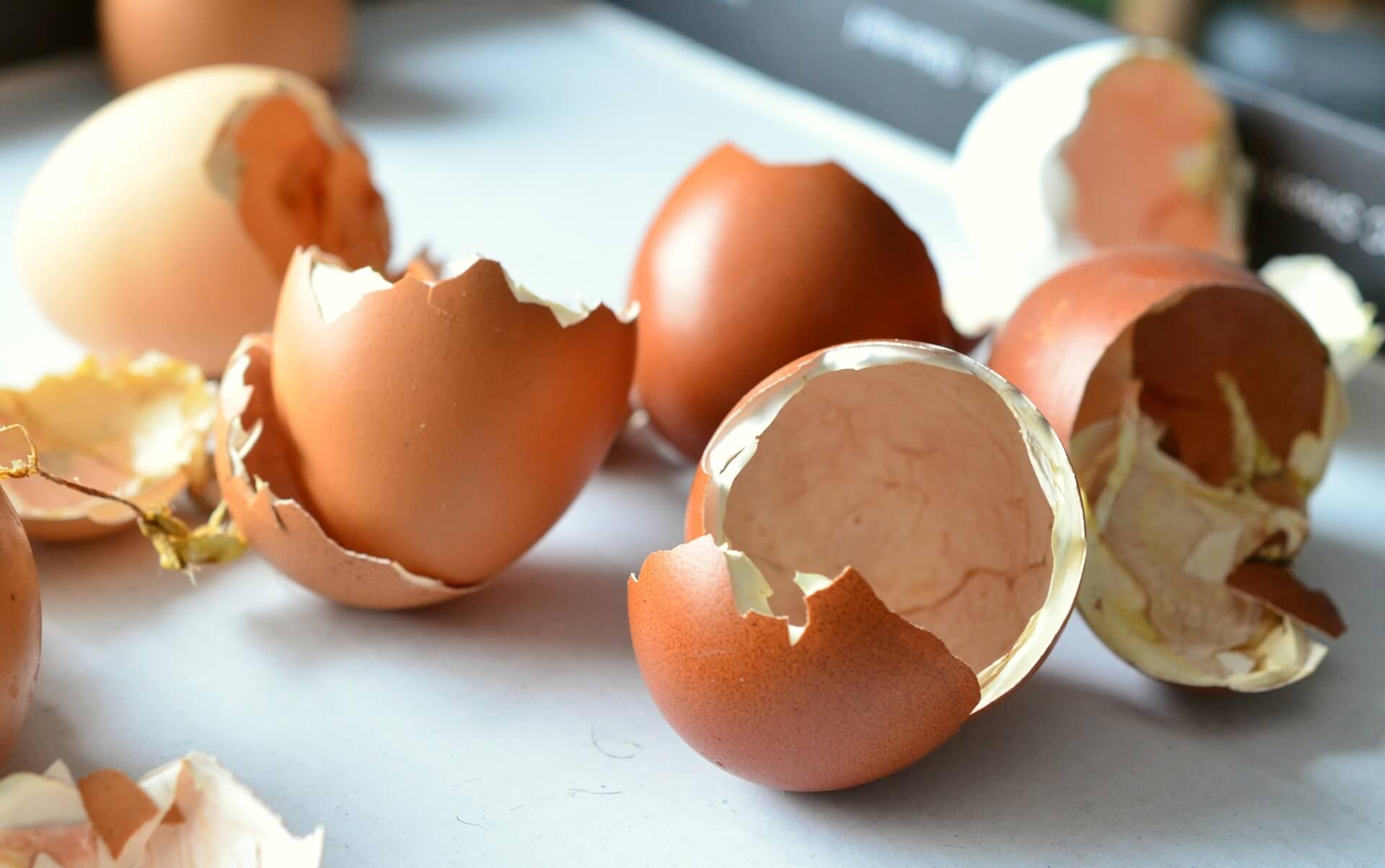 dog ate eggshells