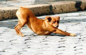 dog stretching a lot