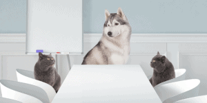 Do Huskies Get Along with Cats