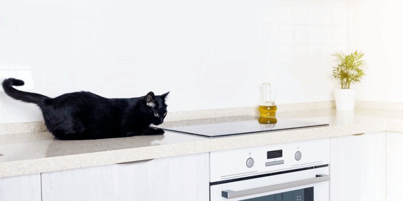 How to Keep Cats off Kitchen Counters