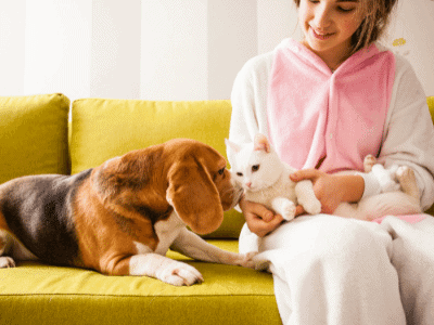 Introduce Beagle and Cat in Neutral Space