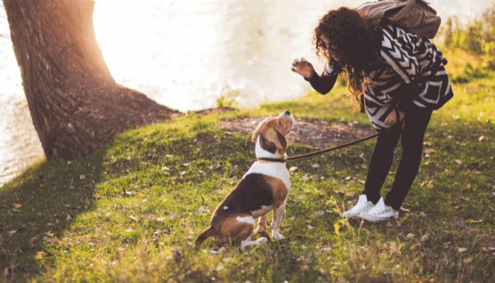 Are Beagles Hard to Train