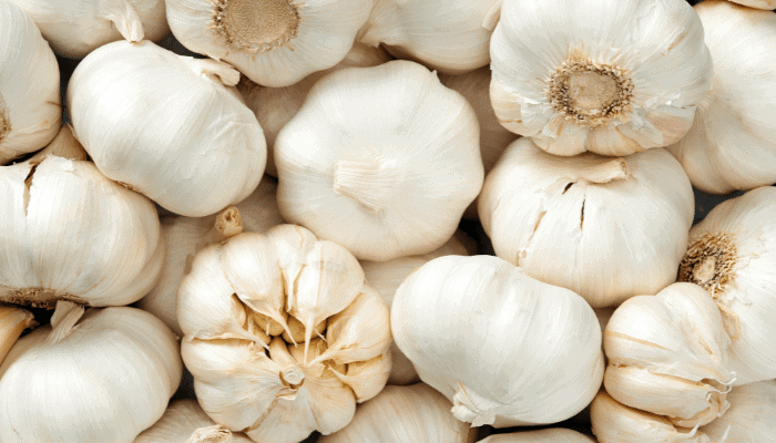 What If My Dog Ate Garlic