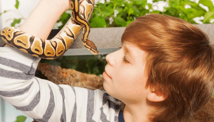 15 Most Popular Pet Snakes